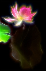 Lotus Flower Fractalius - IMG_3764-v3-fra-800 (Bahman Farzad) Tags: flower macro yoga peace lotus relaxing peaceful meditation therapy lotusflower lotuspetal lotuspetals fractalius lotusflowerpetals lotusflowerpetal
