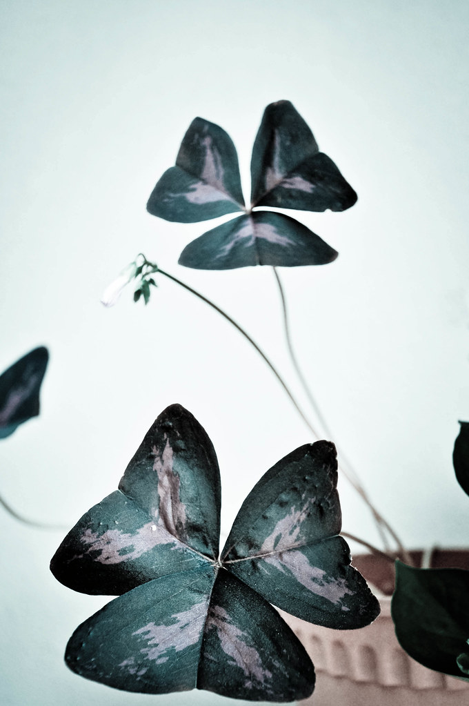 Butterfly plant ...