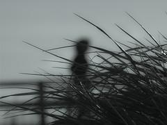Recuerdos (f e r e l m a f e) Tags: blur mar mujer recuerdo desenfoque silueta mediterrneo sueo fantasa