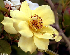 Descansando (Claudia Telles) Tags: flowers insetos insets flres vosplusbellesphotos
