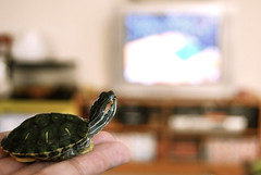 nba finals (sevenworlds16) Tags: red pet home tv bokeh turtle finals slider miles 365 nba lakers eared project3661 2009yip 3652009