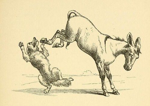 Asinus et Lupus Medicus