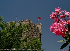 Tower of Medieval Bodrum Castle (voyageAnatolia.blogspot.com) Tags: trip travel pink flowers blue red summer vacation sky holiday tree green tower castle archaeology stone wall museum architecture turkey fort flag branches trkiye turkiye medieval turquie trkei walls defensive fortress archeology turret oleander turquia turkish battlement bodrum ahoy parapet turqua tyrkiet turchia  crenelation embrasure crenellation nerium   castellation turska crenels  fotogezi   voyageanatolia