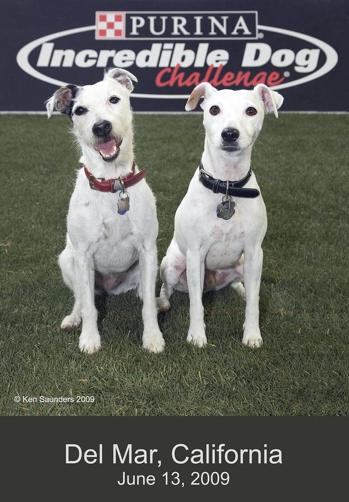 2009 Purina Incredible Dog Challenge - Del Mar RaceTrack
