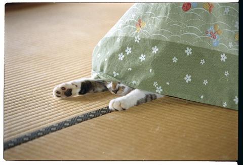 kotatsuhaiku