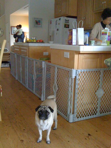 Baby and pug proofing the kitchen