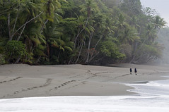 Corcovado_039. (Drumm Photography) Tags: ocean travel trees plants beach nature rainforest costarica pacific native wildlife hike corcovado jungle backpack caribbean eco tico centralamerica ecosystem ecotourism williambyrnedrumm