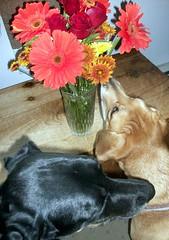 Flowers_LolaSophie_1009