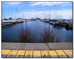 Lakefront Promenade Marina (Lisa-S) Tags: blue sky ontario canada yellow clouds marina boats waterfront lisas mississauga allrightsreserved purpleloosestrife 4716 lakeshorepromenade copyrightlisastokes