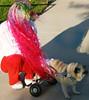 (wisely-chosen) Tags: dog dawn october lawn pug sidewalk bebe custom redhair pinkhair bluehair orangehair 2009 picnik purplehair theempress beebs greenhair dogwheelchair yellowhair dogcart rainbowhair verylonghair fawnpug colorfulhair lavenderhair naturallycurlyhair eddieswheels pugonwheels adobephotoshopcs4 manicpanicprettyflamingo manicpanicflaming manicpanicatomicturquoise manicpanicvampirered rescuedpug empressbebe empressbeebs sweetbeebs pugpanties manicpanicultraviolet manicpanicbadboyblue manicpanicfuschiashock manicpanicpurplehaze manicpanicshockingblue manicpaniclielocks manicpanicelectricbanana manicpanicelectriclizard walkingbeebs