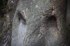 Rocks / () (TANAKA Juuyoh ()) Tags: high rocks hires resolution 5d hi res  markii   canonef100mmf28lmacroisusm