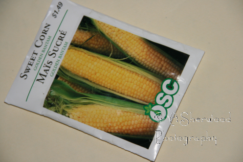 cornseeds