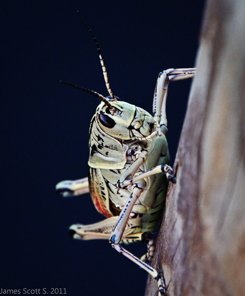 The World's Best Photos of florida and locusts - Flickr Hive