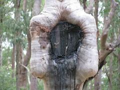 Tree Swallows Sign (Close up)
