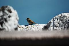 Freedom (Letizia Da Re) Tags: birds blue lightblue pantone bird freedom scorch d7000 nikond7000 nikon nikonista 50mm macro animals nature