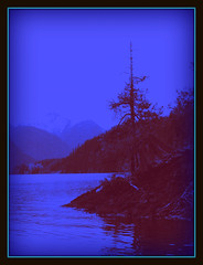the point in blue (calamityjan2008 ....somany galleries!) Tags: blue trees sky mountain lake tree water point silhouettes hills vancouverisland driftwood ripples lonetree blueandred snowcappedmountain pumpupthevolume treeonthepoint cantresistblue