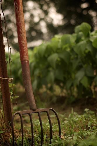 169/365 - in the garden
