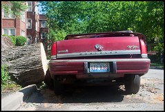 car, meet tree stump (Andy Marfia) Tags: summer chicago storm iso200 aftermath automobile andersonville f71 allrightsreserved fallentree d90 obliterated citysticker 1250sec andymarfia 1685mm