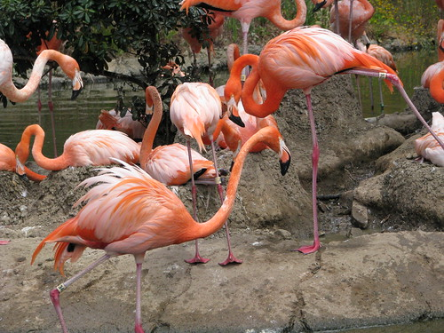 I dont know why but I LOVE Flamingos...