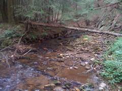 8 - Cane Creek