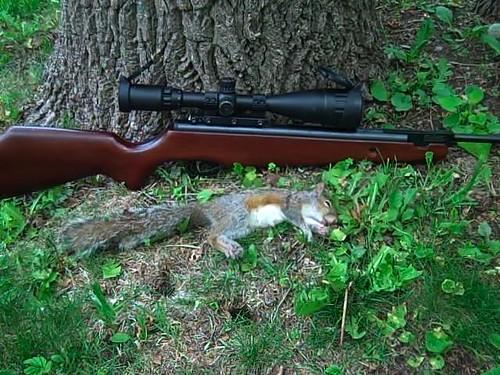 Some Hunting Pics/Stories   *Graphic* - Yellow Airgun Forum