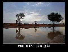 Landscape (TARIQ-M) Tags: sand desert riyadh saudiarabia canonefs1855 canon400d colorphotoaward