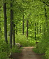 Beech wood (Ingrid0804) Tags: wood trees friends dog green forest goldenretriever denmark spring path peaceful beechwood naturesfinest coth gribskov walkinginbeauty anawesomeshot diamondclassphotographer theunforgettablepictures 100commentgroup virtualjourney saariysqualitypictures