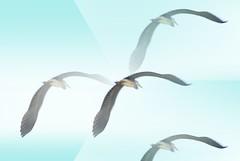 Huge bird like a heron; but is it a heron? (venetia koussia) Tags: blue seagulls swimming sundown geranium rockybeach sandybeach sporades skiathosisland summeringreece  greekfona