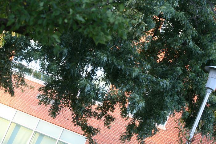 08-09-tree