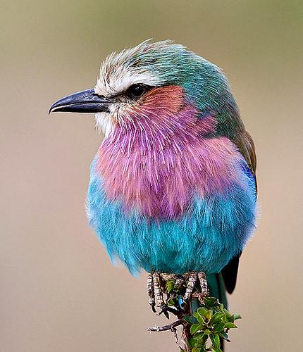 3810447699 529974a3f7 Beautiful Birds   The Splash of Colors!!!
