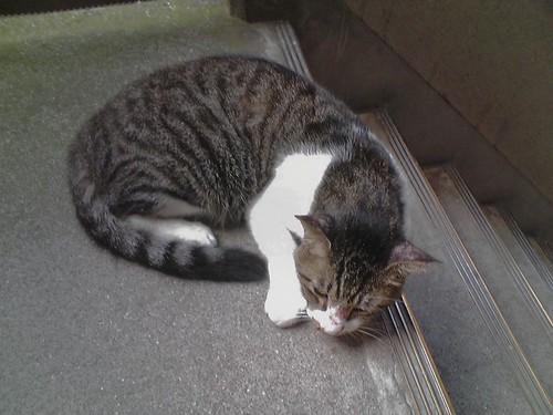 Cat_2009-08-11