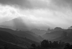 Black Spotlight in B&W (QooL /   ) Tags: travel bw mist misty clouds landscape dawn blackwhite tea hills malaysia plantation layers cameronhighlands pahang qool sgpalas qoolens
