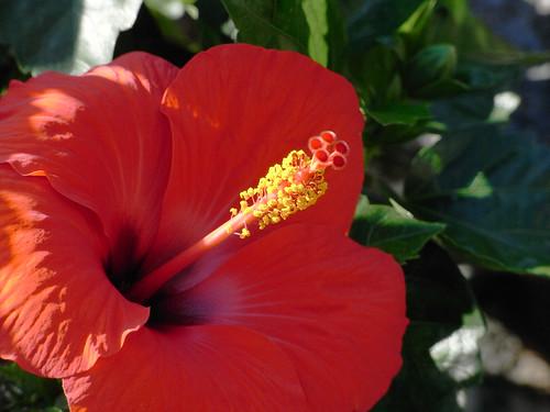 Flower-044