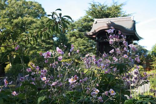 Kew Gardens_0050