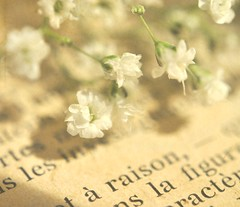 Reading the small print -- in French! (luvpublishing) Tags: flowers floral vintage print french newspaper antique picnik babysbreath whiteflowers fauxvintage oldprint tinyflowers oldnewspaper frenchtext explored frenchnewspaper softdreamyandethereal antiquetext frenchprint vintagefrenchnewspaper