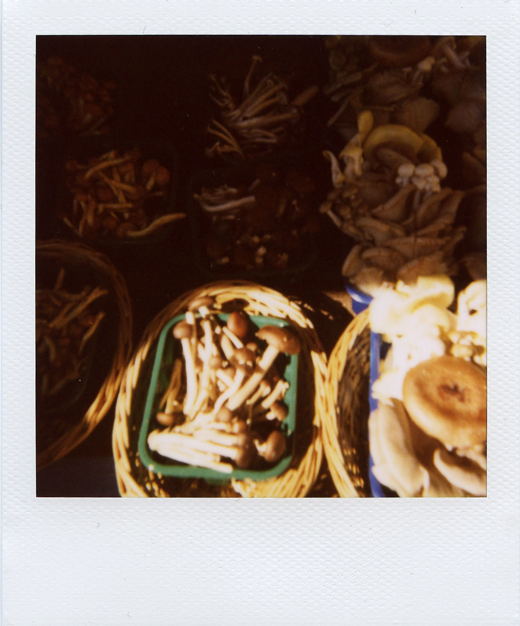 pola: shrooms