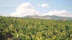 San Juan: Cooperativa La Riojana elaborará vinos en la provincia
