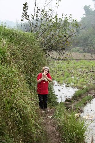 paddy path