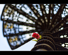 flower and a spiraling bokeh.. (explored, front page) (PNike (Prashanth Naik..back after ages)) Tags: blue red sky india flower green rose vertical spiral golden nikon bokeh explore staircase hyderabad andhrapradesh spiraling explored bokehlicious straiw
