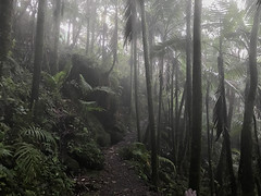 Puerto Rico Cloud Forest