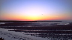 Flying Bird at Sunset on Holy Island (Darren Schofield) Tags: ocean sunset sea england sky bird beach water tide horizon flight peaceful tranquility northumberland hues tranquil holyisland lindisfarne sanddunes