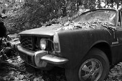 Rover P6 3500 V8 (Volvo-Turbo) Tags: graveyard schweiz natur rusty rover rost autofriedhof autoverwertung fahrkultur kaufdorf messerli