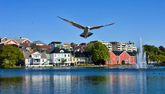 Soaring Over Stavanger (Jim Boud) Tags: reflection bird water fountain norway stavanger flying pond seagull cottage spray soaring jimboud jrbxom jamesboud jamesboudphotoart