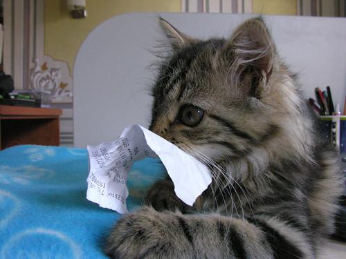 Yumoş és a papír