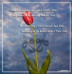 Lale'nin Olu Srr (green architect   Inovation) Tags: tulips hu bu hale bir allah tulipa iki hali iek lale nasl yaprak akn geldi lafzatullah