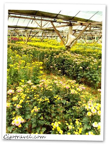 Milion garden