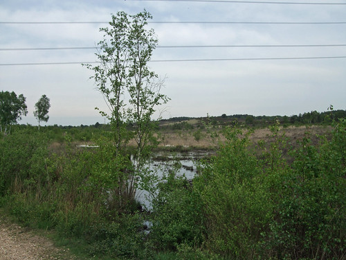 chobhamcommon-ponds