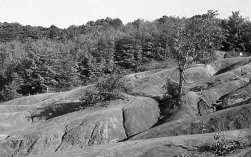Stark Landscape