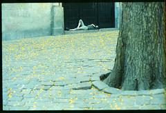 Riposo (3nt) Tags: barcelona barcellona expiredfilm ciolla plaçasanfelipneri pellicolascaduta chinoncm7