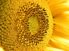 fusion ( nicolas_gent ) Tags: beautiful twop otw interestingshot flowersarebeautiful platinumheartaward mimamorflowers flickrbestpics awesomeblossoms nikonflickraward flickraward dragonsdanger qualitysurroundings platinumpeaceaward flickrunitedaward